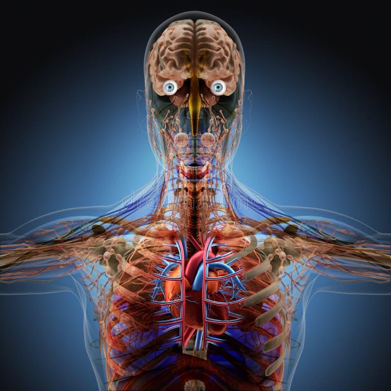 Människokroppen vid röntgenstrålar på blå bakgrund stock illustrationer