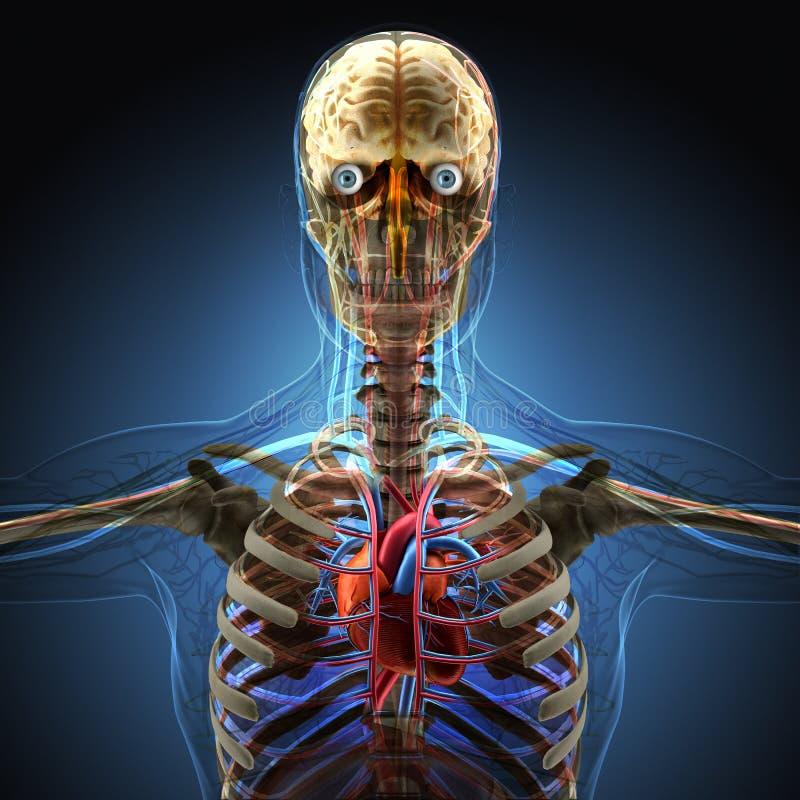 Människokroppen vid röntgenstrålar på blå bakgrund vektor illustrationer