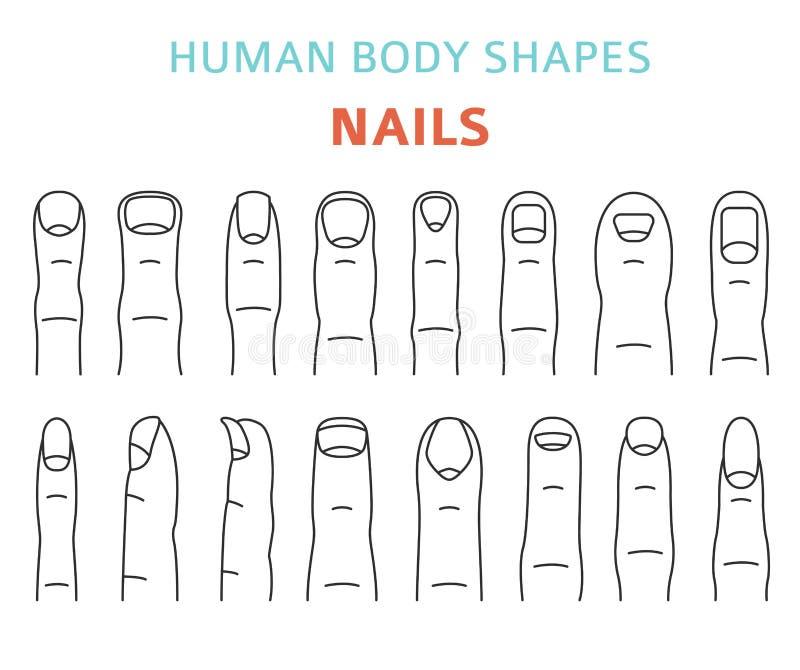 Människokroppformer Handfingret spikar typuppsättningen stock illustrationer