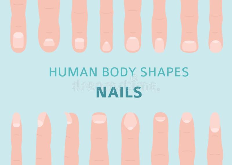 Människokroppformer Handfingret spikar typuppsättningen royaltyfri illustrationer