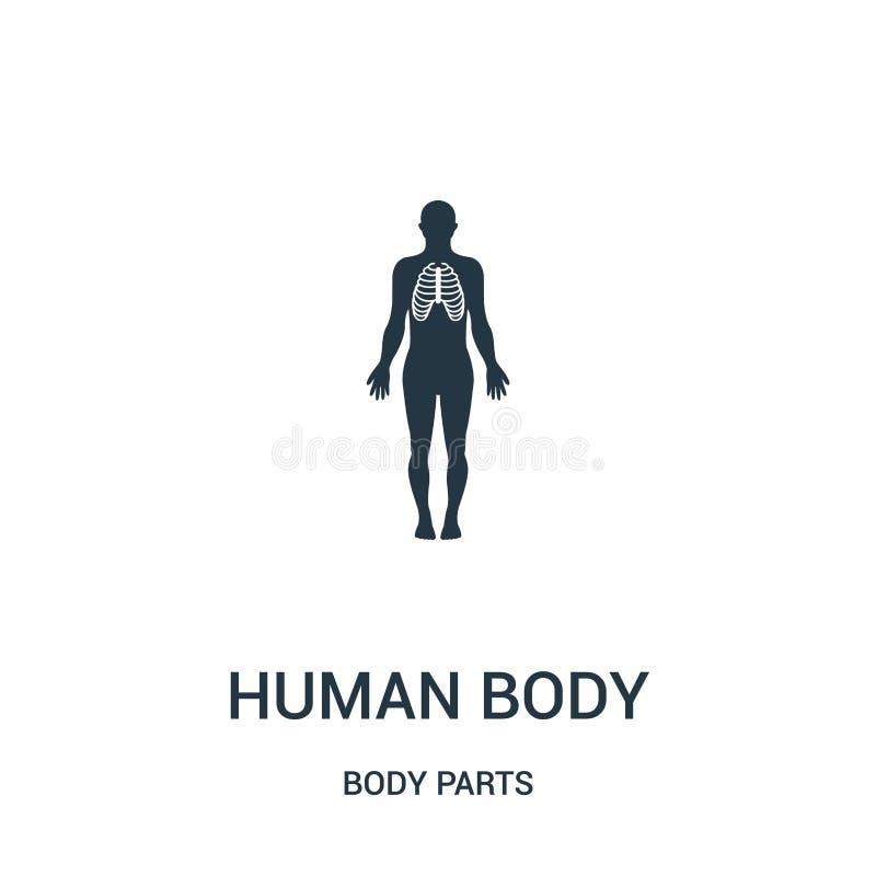 människokroppkontur med fokusen på symbolsvektor för respiratoriskt system från kroppsdelsamling Tunn linje människokroppkontur royaltyfri illustrationer
