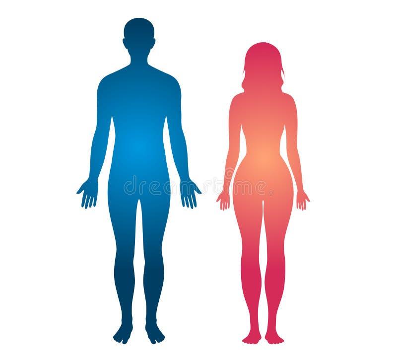 Människokroppkonturmannen och kvinnor förkroppsligar vektorillustrationen vektor illustrationer