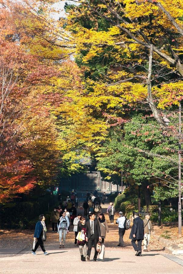 Människor rullar under de färgstarka höstbladen i Ueno Park, Tokyo royaltyfri fotografi