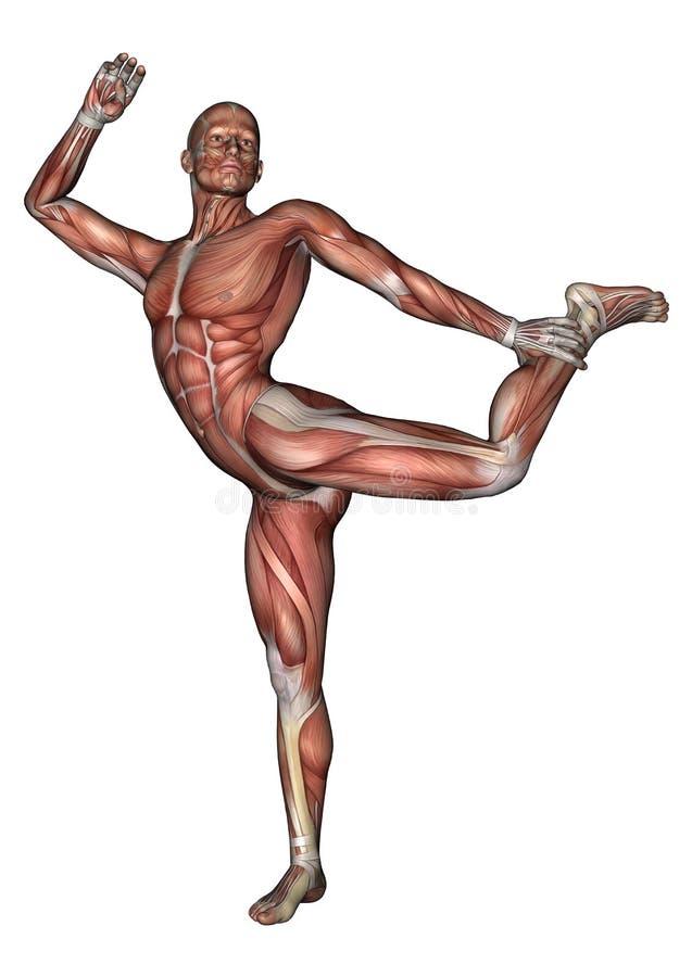 Männliche Anatomie-Zahl stock abbildung