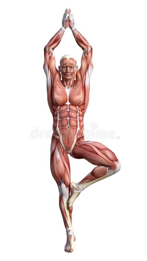 männliche Anatomie-Zahl der Wiedergabe-3D auf Weiß vektor abbildung