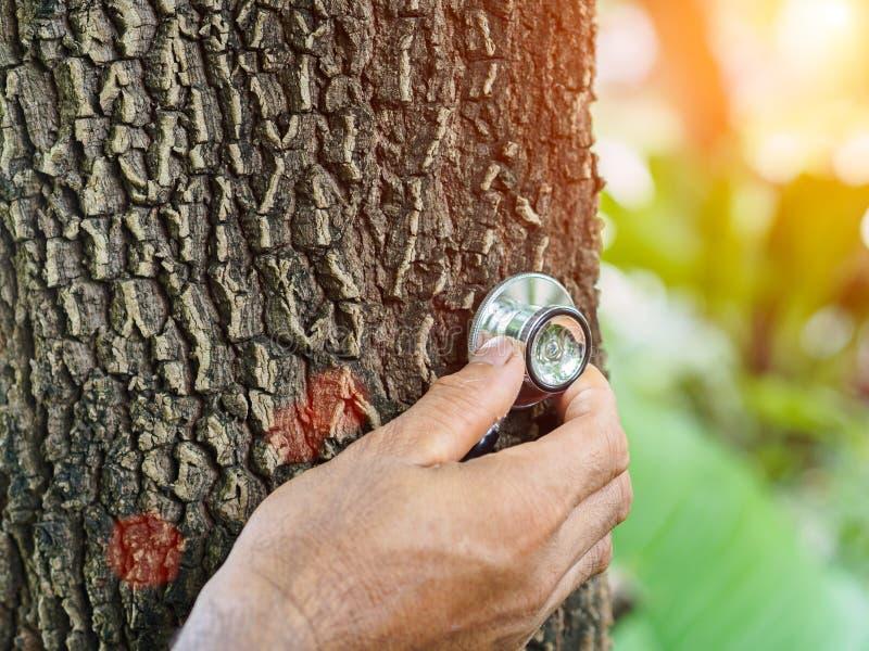 Männliche hörende Hand ein Baum mit einem Stethoskop, Abwehrumwelt lizenzfreie stockfotos