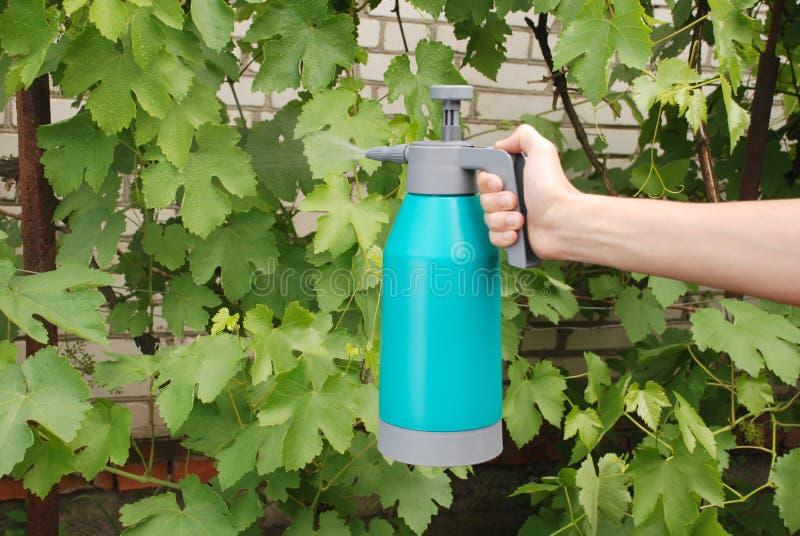 Männliche Hand, die Sprühflasche hält lizenzfreie stockbilder