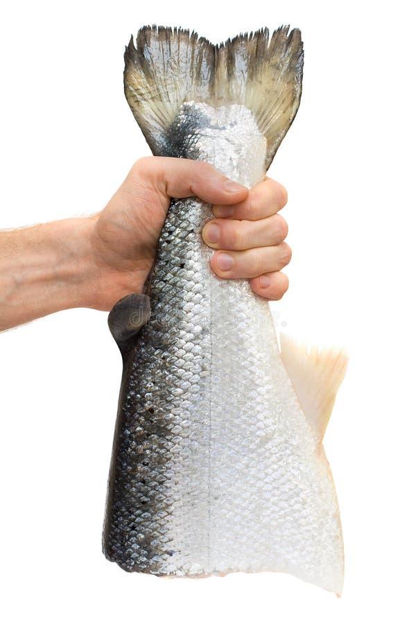 Männliche Hand mit Lachsfischen lizenzfreie stockfotografie