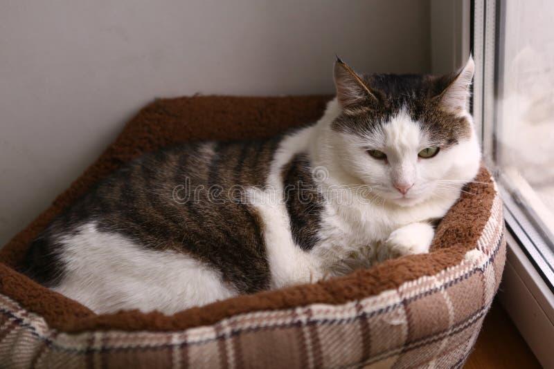 Männliche Katze Toms gelegt in Bettnest stockbild
