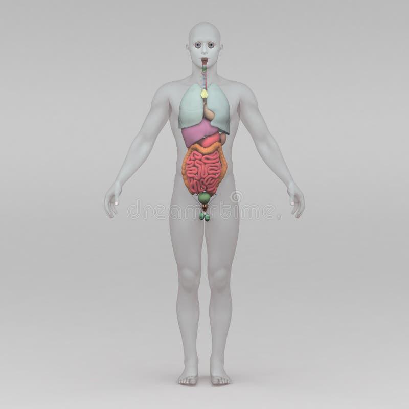 Großartig Menschliche Anatomie Mannequin Fotos - Anatomie Ideen ...