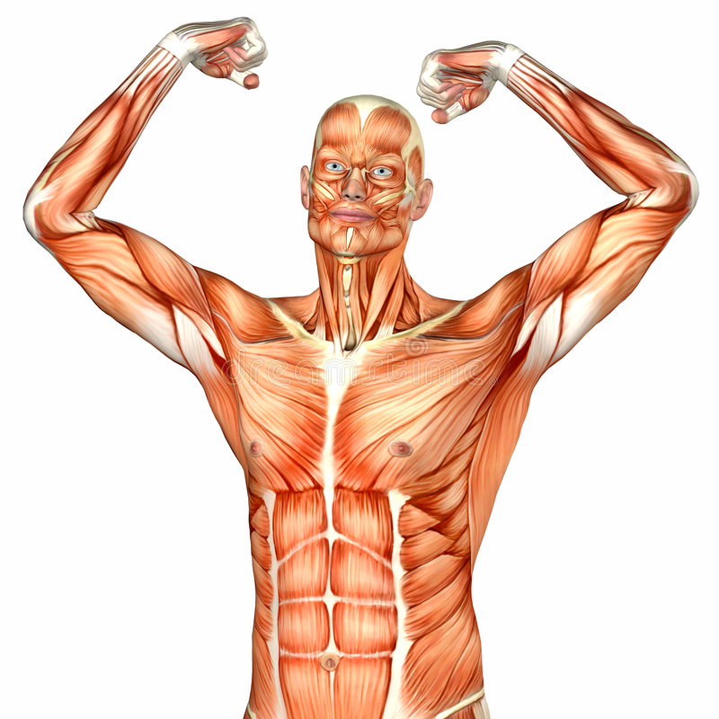 Charmant Körperanatomie Organe Galerie - Menschliche Anatomie Bilder ...