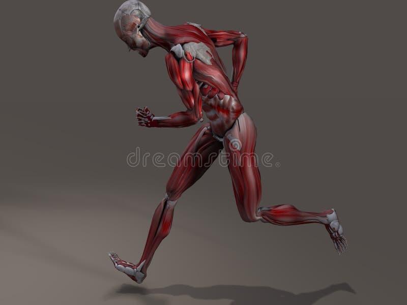 Männliche Muskulatur-Aktion lizenzfreie abbildung