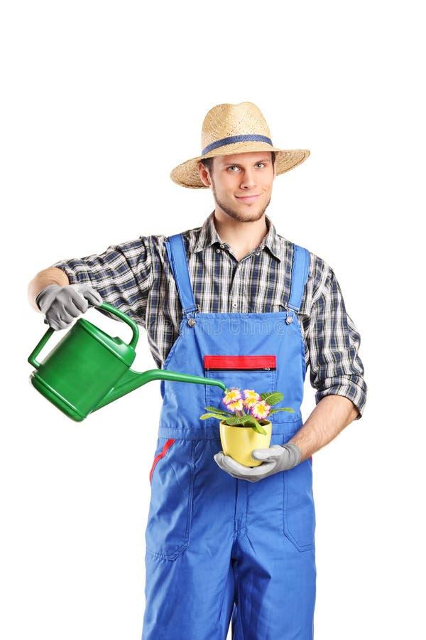 Männlicher Gartenkünstler, der eine Anlage wässert lizenzfreies stockfoto