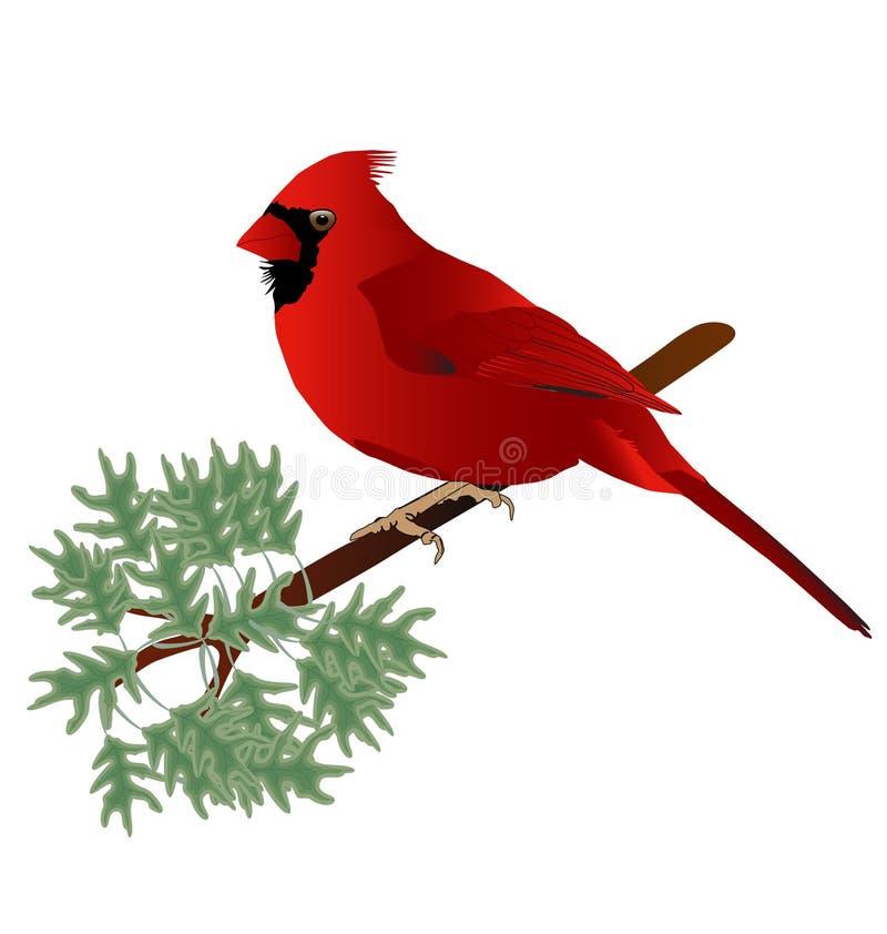 Männlicher Kardinal