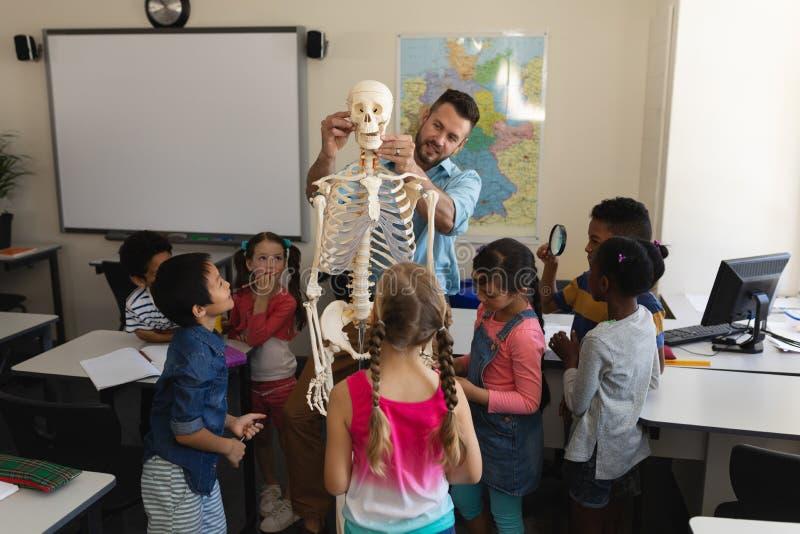 Männlicher Lehrer, der Skelettmodell im Klassenzimmer erklärt lizenzfreies stockbild