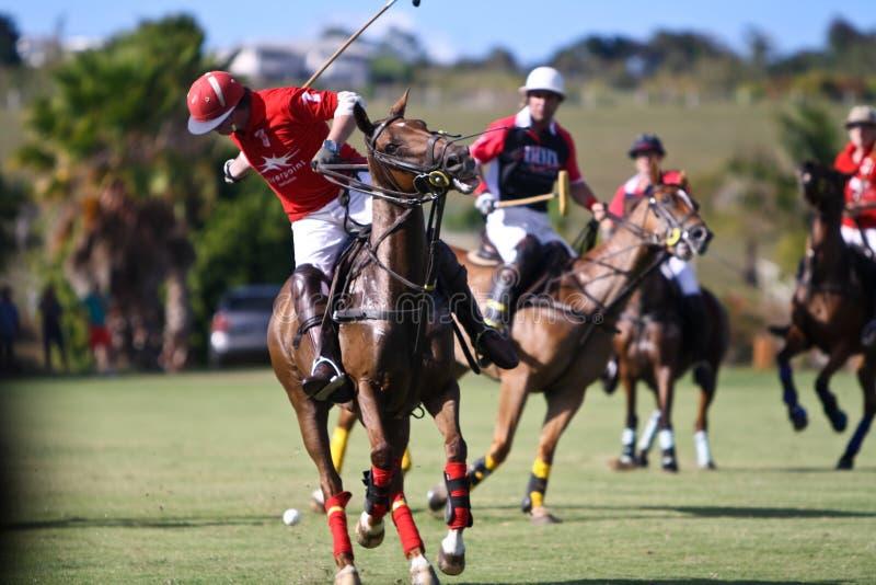 Männlicher Polo-Spieler stockfotos