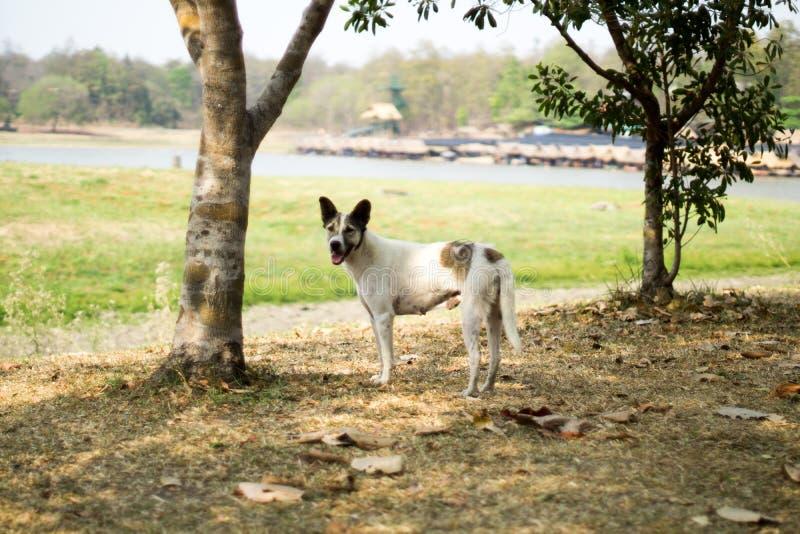 Männlicher streunender Hund nahe dem Huay Tung Tao Lake /Reservoir ChaingMai lizenzfreies stockbild