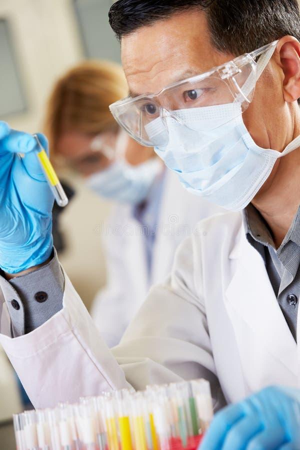 Männlicher Wissenschaftler, der Reagenzglas im Labor studiert stockfotografie