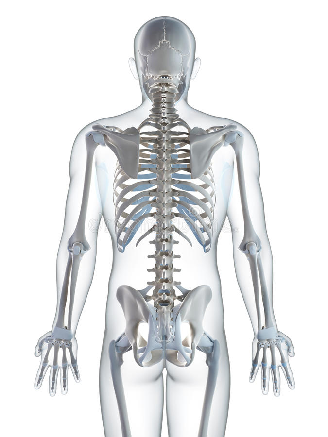 Berühmt Vergleichsskelettanatomie Ideen - Anatomie Ideen - finotti.info