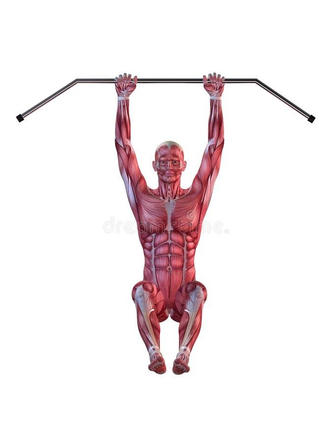 Männliches Training - hängende Fahrwerkbeinerhöhungen vektor abbildung
