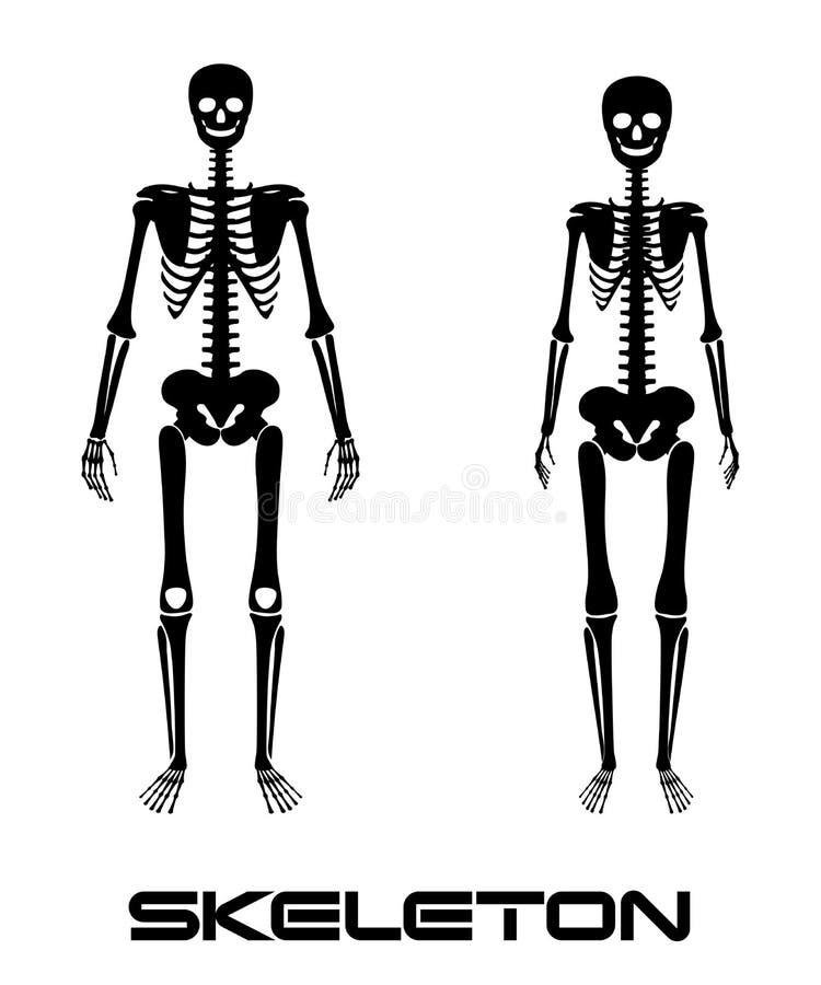 Niedlich Anatomie Skelett System Test Zeitgenössisch - Anatomie ...