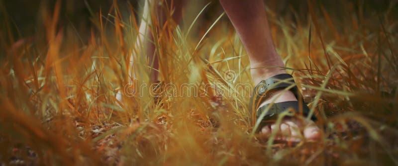 Mäns fot i sandal på gräset royaltyfria foton