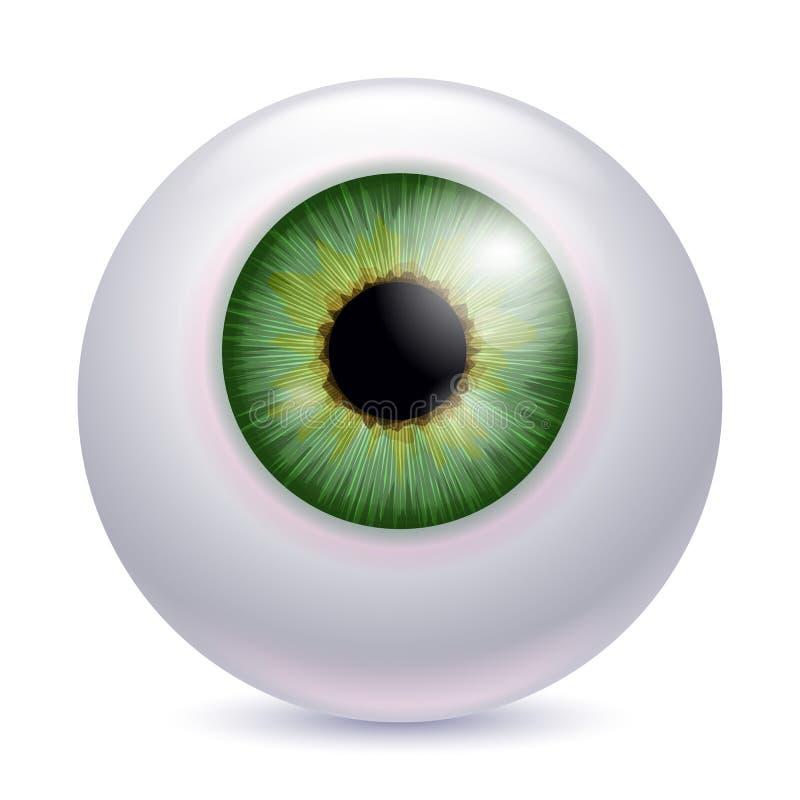 Mänsklig ögonglobiriselev - grön färg vektor illustrationer