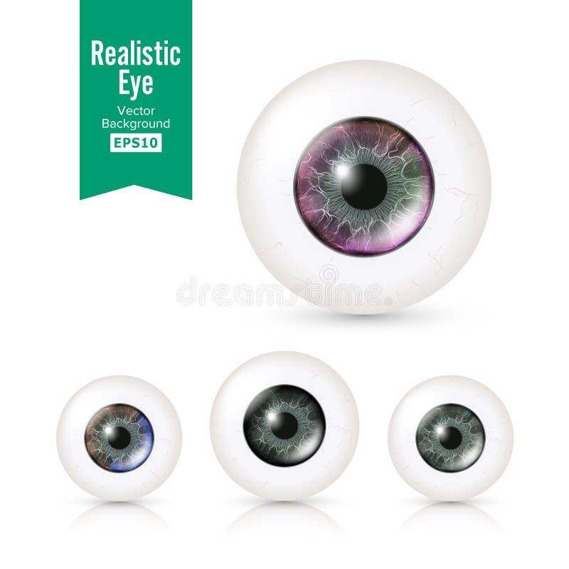 Mänsklig ögonglobuppsättning med stora iriers i färg Vektorillustration av det glansiga detaljerade ögat 3d med skugga och reflex royaltyfri illustrationer