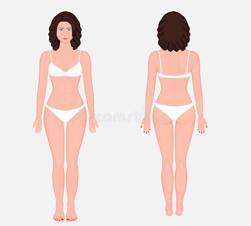 Mänsklig anatomy_European kvinnakropp royaltyfri illustrationer