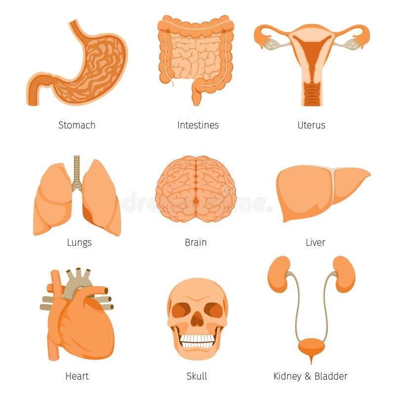 Mänsklig för objektsymboler för inre organ uppsättning royaltyfri illustrationer