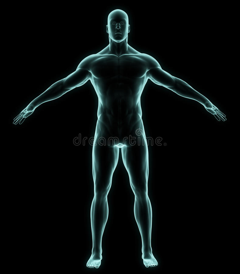 Mänsklig full kropp för röntgenstråle vektor illustrationer