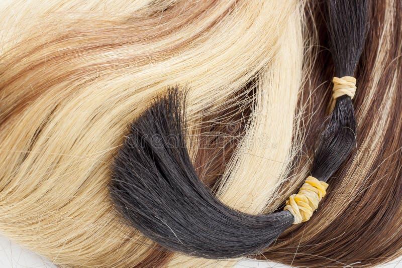 Mänsklig hairt Hårsvans Brun förlängning för blont hår Hårsnitt tätt hår skjuten textur upp royaltyfria foton