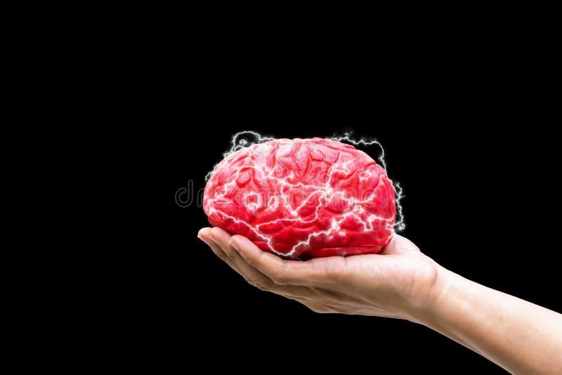 Mänsklig hand som rymmer kommandobegreppshjärnan i minne arkivbilder