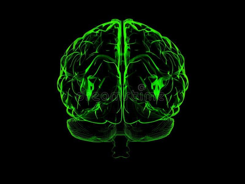 mänsklig hjärna 3d vektor illustrationer