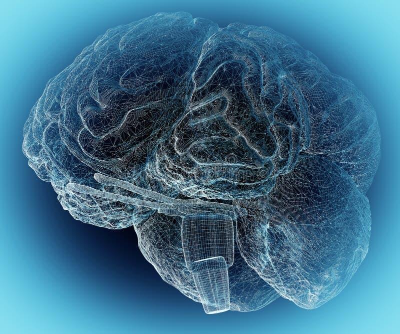 Mänsklig hjärna 1 arkivbilder