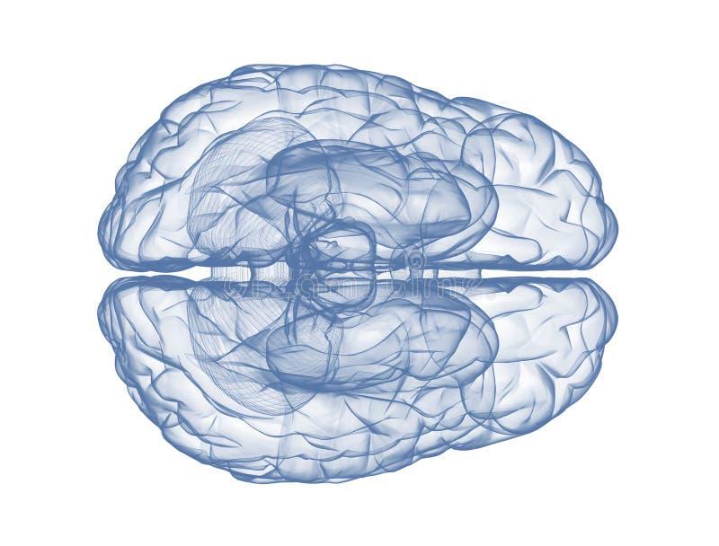 Mänsklig hjärna - bästa sikt royaltyfri illustrationer
