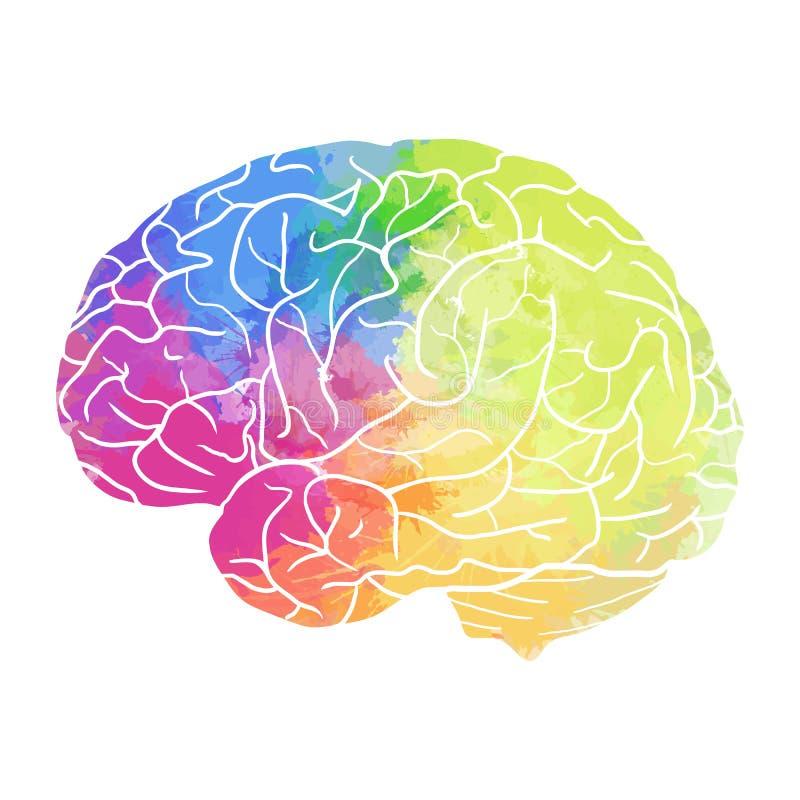 Mänsklig hjärna med regnbågevattenfärgsprej på en vit bakgrund royaltyfri illustrationer