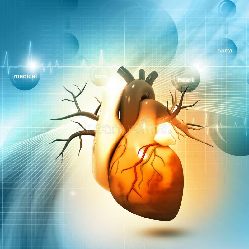 Mänsklig hjärta stock illustrationer