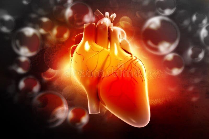 Mänsklig hjärta royaltyfri illustrationer