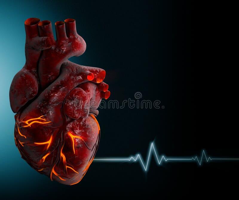 Mänsklig hjärta - anatomi av den mänskliga illustrationen för hjärta 3d royaltyfri illustrationer