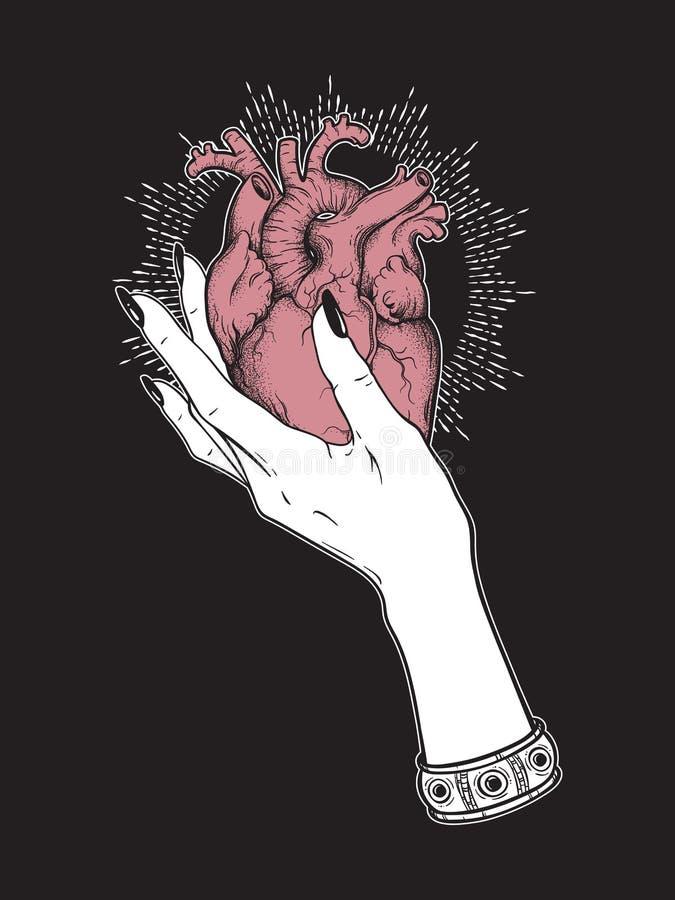 Mänsklig hjärta i den isolerade behagfulla kvinnliga handen Illustration för vektor för klistermärke-, tryck- eller blackworktatu vektor illustrationer