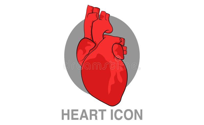 Mänsklig hjärtasymbol vektor illustrationer