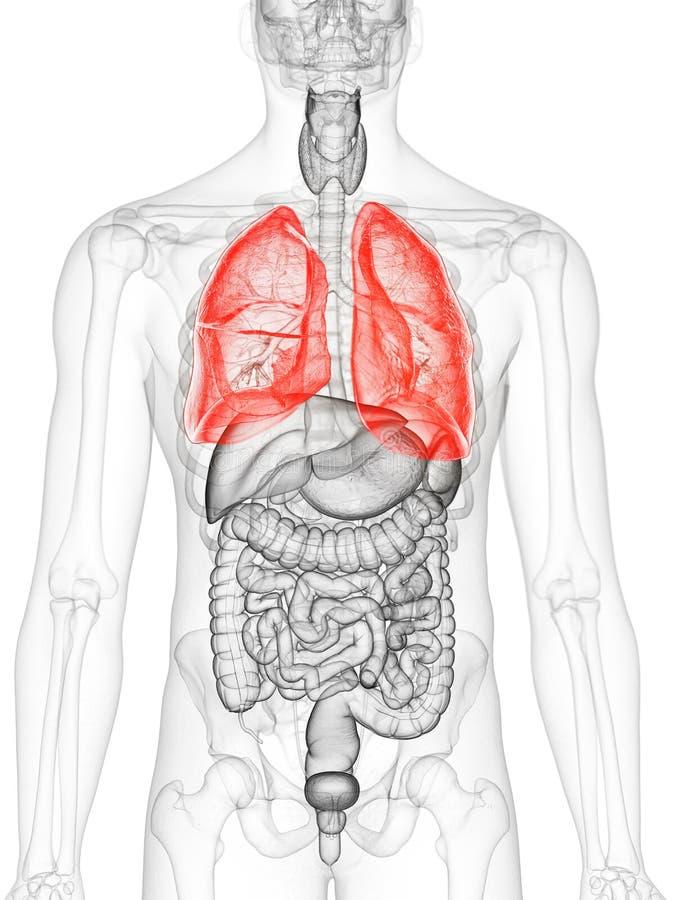 mänsklig lung stock illustrationer