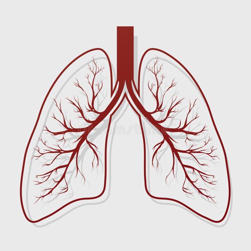 Mänsklig lungaanatomiillustration vektor illustrationer
