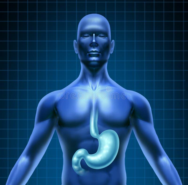 mänsklig mage för matsmältning stock illustrationer