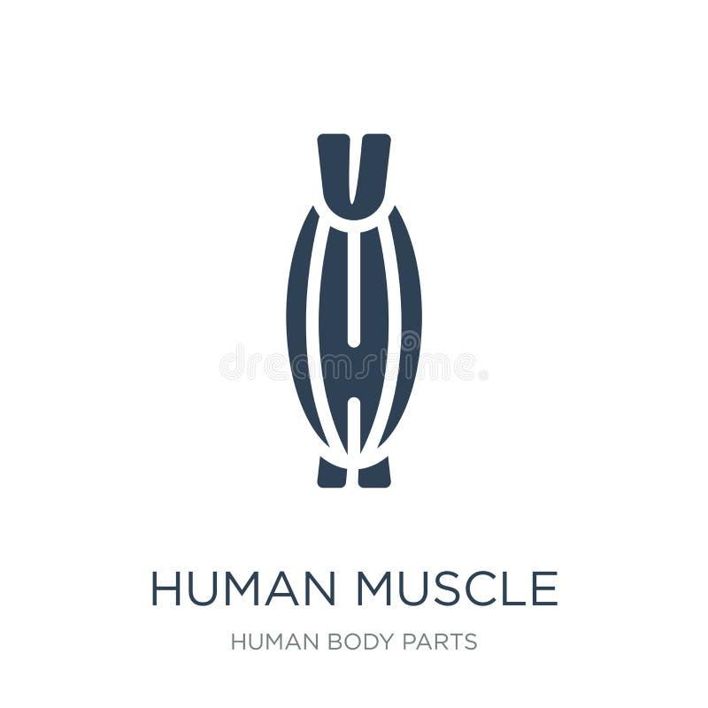 mänsklig muskelsymbol i moderiktig designstil Mänsklig muskelsymbol som isoleras på vit bakgrund mänsklig enkel muskelvektorsymbo royaltyfri illustrationer