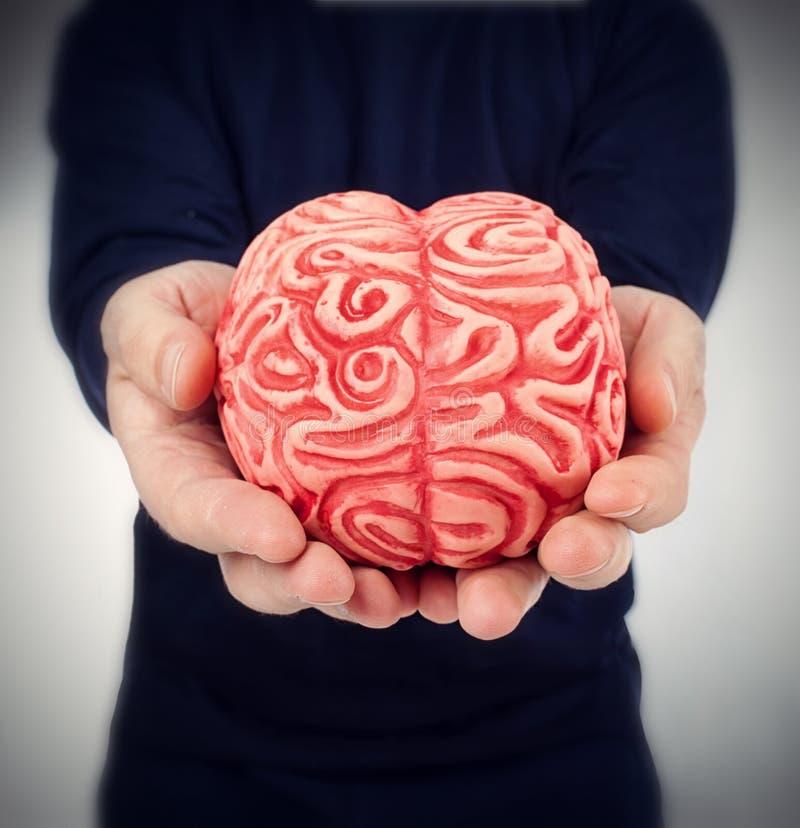 Mänsklig rubber hjärna mellan händerna arkivbilder