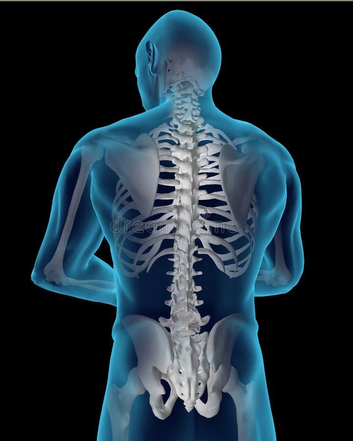 mänsklig rygg vektor illustrationer