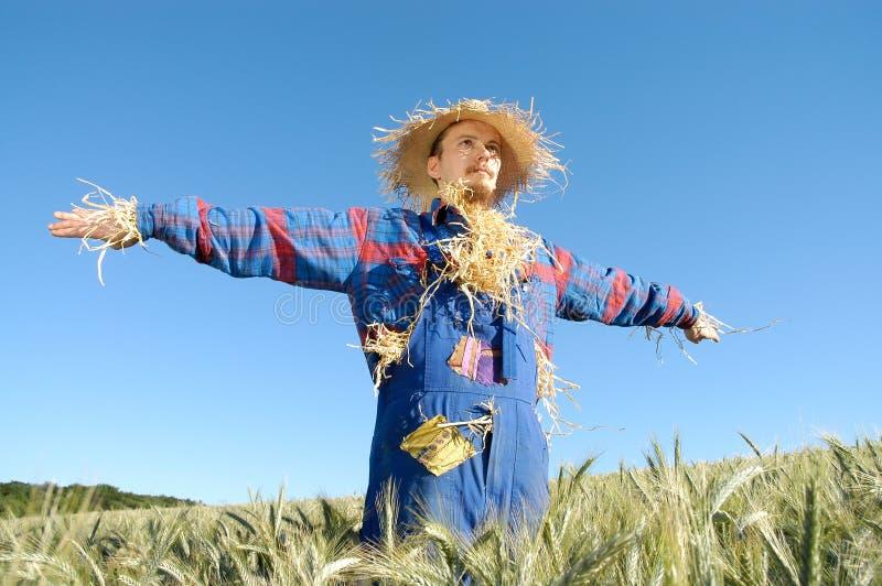 Download Mänsklig scarecrow arkivfoto. Bild av vete, person, folk - 284032