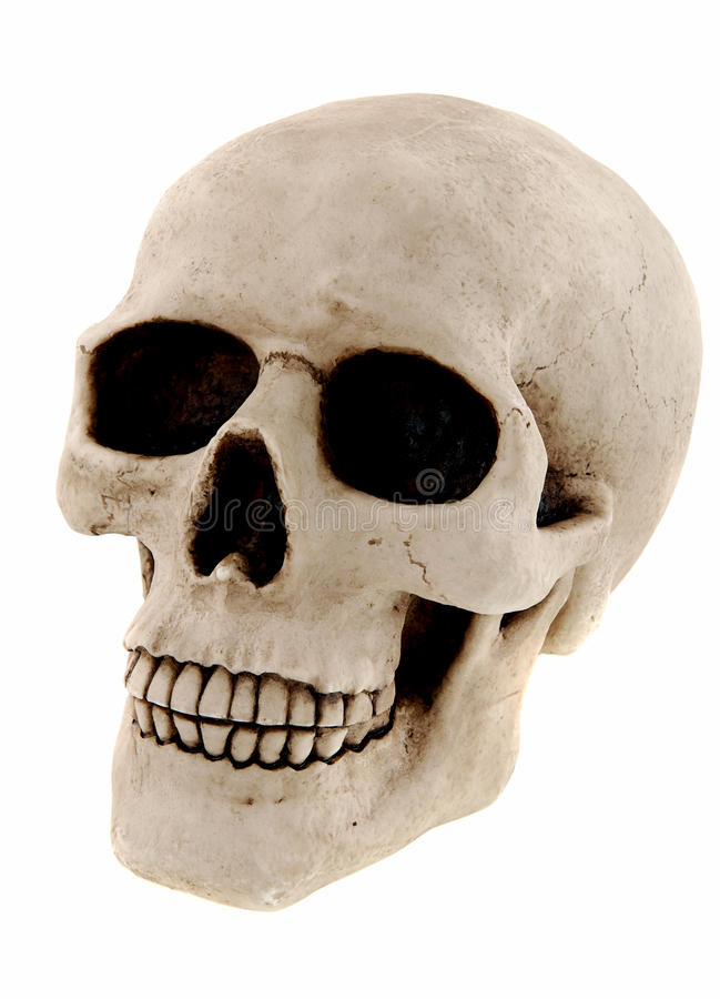 mänsklig skalle royaltyfri bild